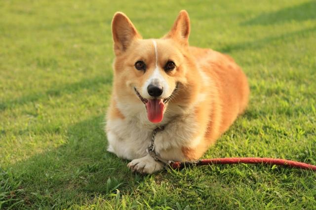 ペットへのオゾン療法での期待できる効果